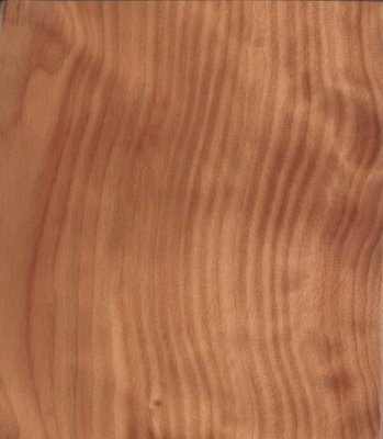 australian cypress.JPG